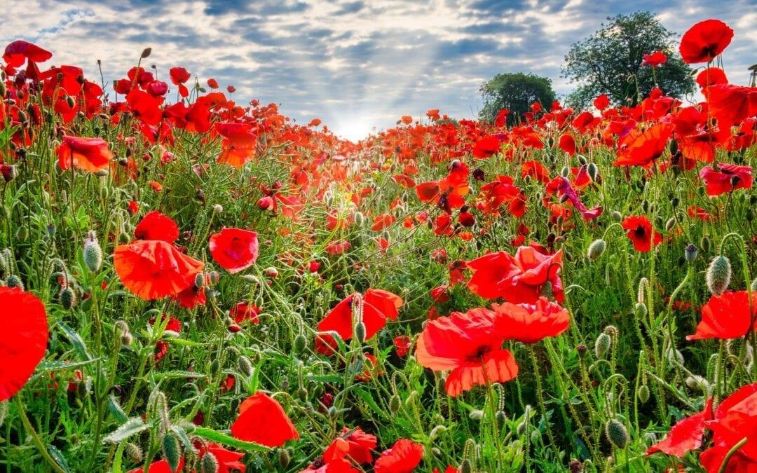 Jour du souvenir – Remembrance Day