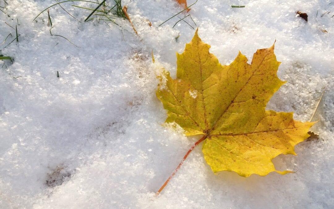 Selling in November or December – Vendre en novembre ou en décembre